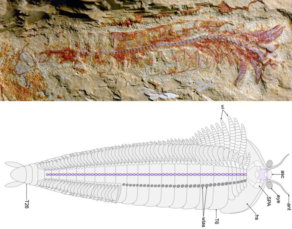 寒さの戻りとカンブリア紀の化石の解析_c0025115_19243818.jpg