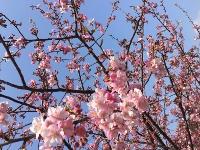 春を待つ_e0149215_1258452.jpg