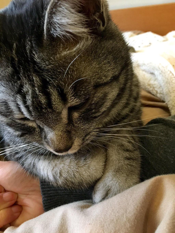 イムにゃん猫風邪(´・ω・`)_d0118933_915533.jpg