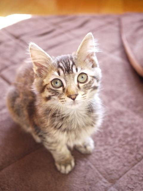 猫のお留守番 トムくん編。_a0143140_2043275.jpg