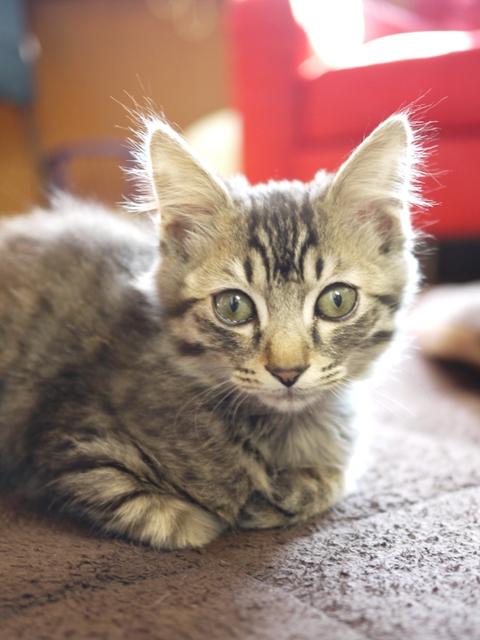 猫のお留守番 トムくん編。_a0143140_2053619.jpg