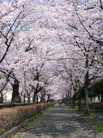 春の訪れを告げる「きくち初市」2016_a0254656_18393160.jpg