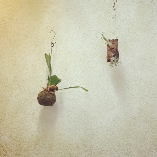 PLANTS_c0341260_09263527.jpeg