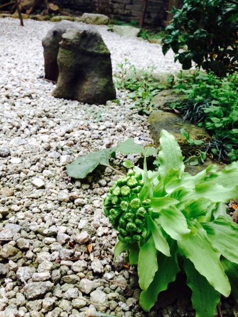 寒いけど、春♪_f0232994_14213610.jpg