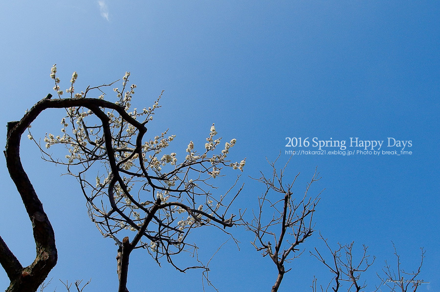 2016 Spring Happy Days_b0136403_23524338.jpg