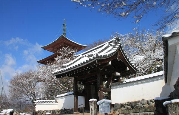 春の淡雪2 三明院~松ヶ崎大黒天へ_e0048413_15571783.jpg