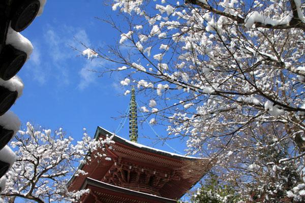 春の淡雪2 三明院~松ヶ崎大黒天へ_e0048413_15572994.jpg