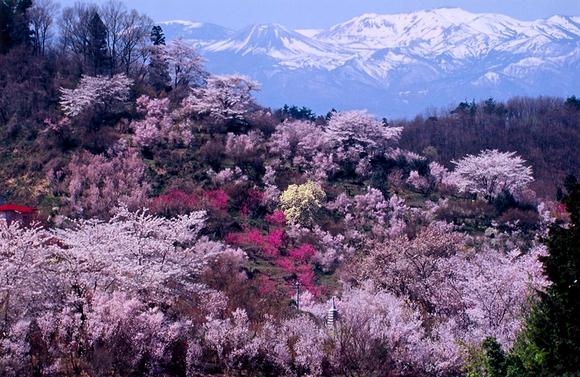 花見山公園_福島に桃源郷あり_d0348249_10272819.jpg