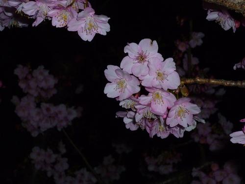 志村ふくみ展  於 : 京都国立近代美術館_d0159384_1643544.jpg