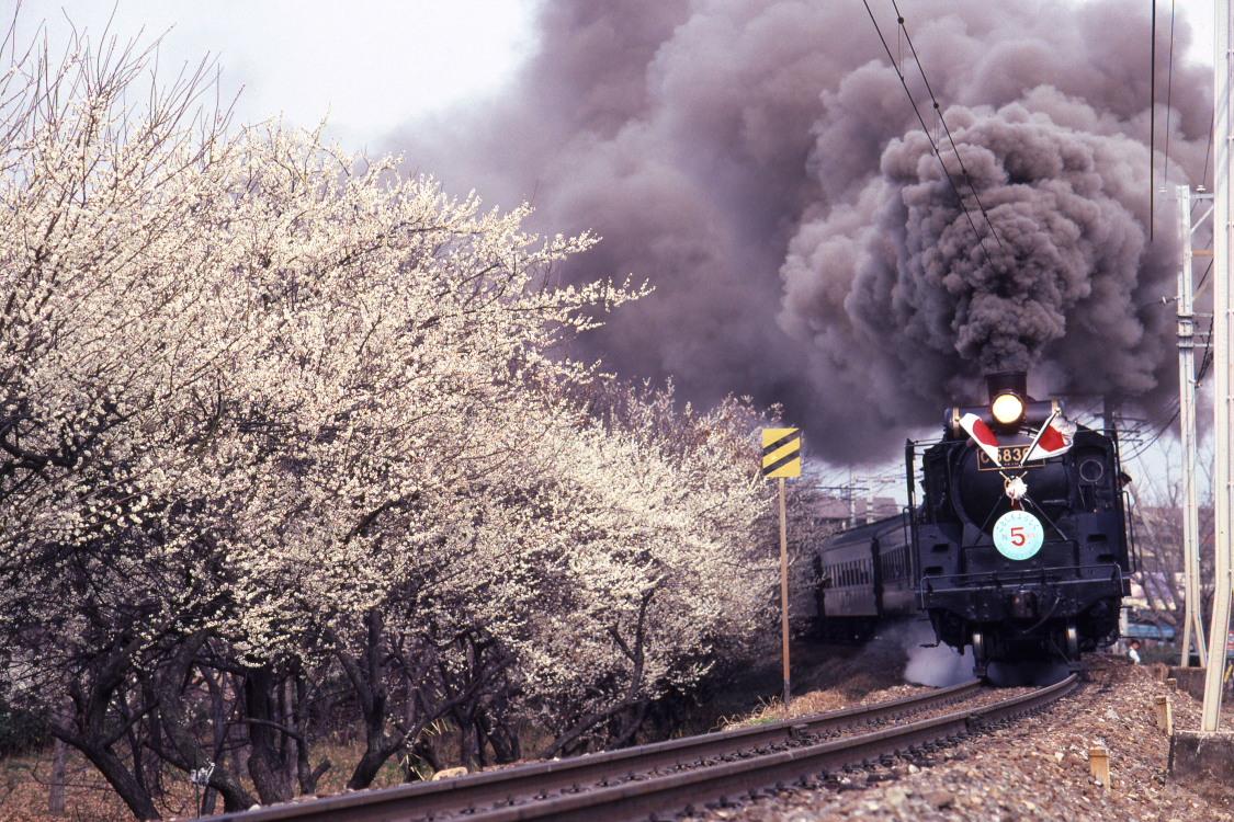 梅と黒煙 - 秩父鉄道 -   _b0190710_2332388.jpg