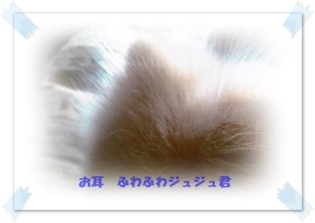 b0167519_22373228.jpg