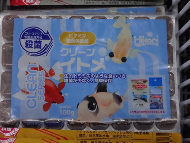 160303 熱帯魚・淡水魚・侘び草・水草・観葉植物_f0189122_1323937.jpg
