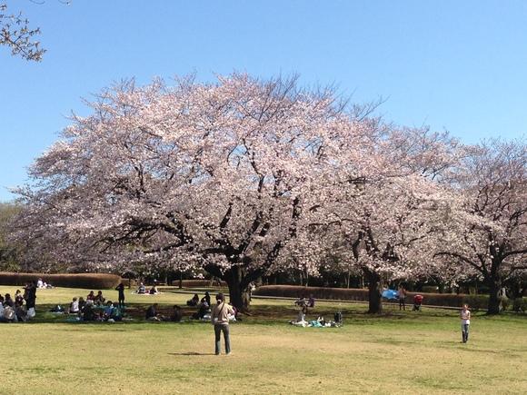 もうすぐ春ですね!!_a0212145_9425969.jpg