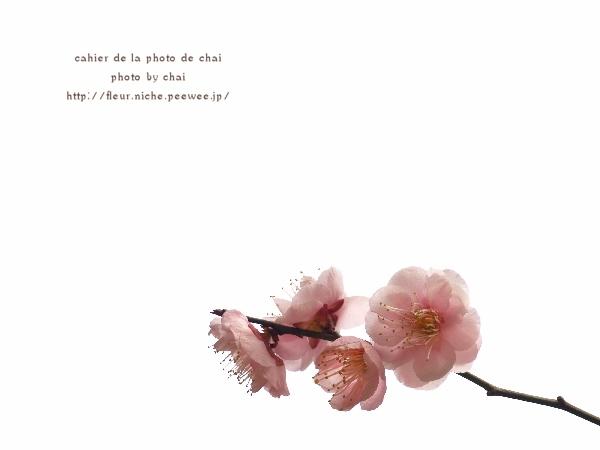 梅の香 #4_b0320893_20324552.jpg