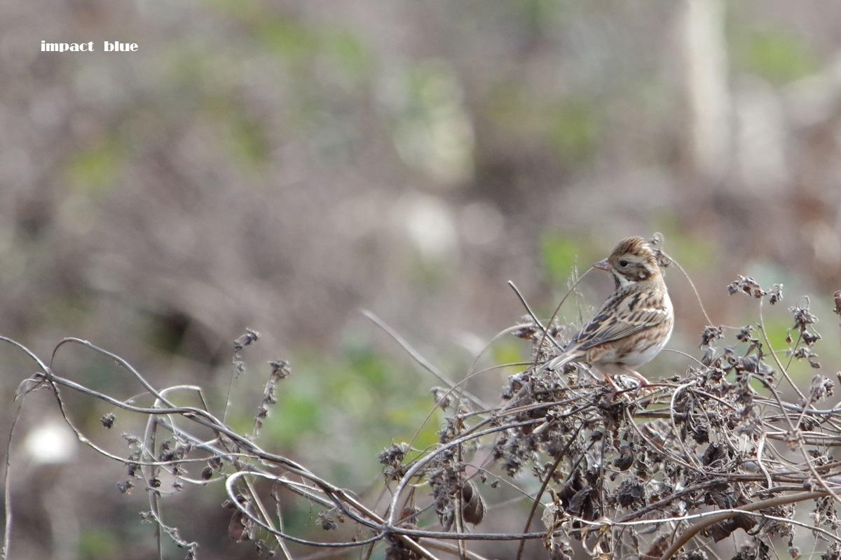 大きな森の野鳥たち♪_a0355908_20352785.jpg
