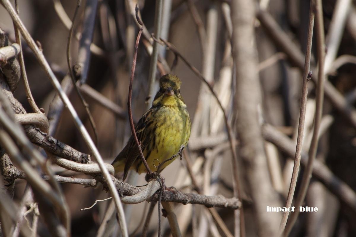 大きな森の野鳥たち♪_a0355908_20361561.jpg