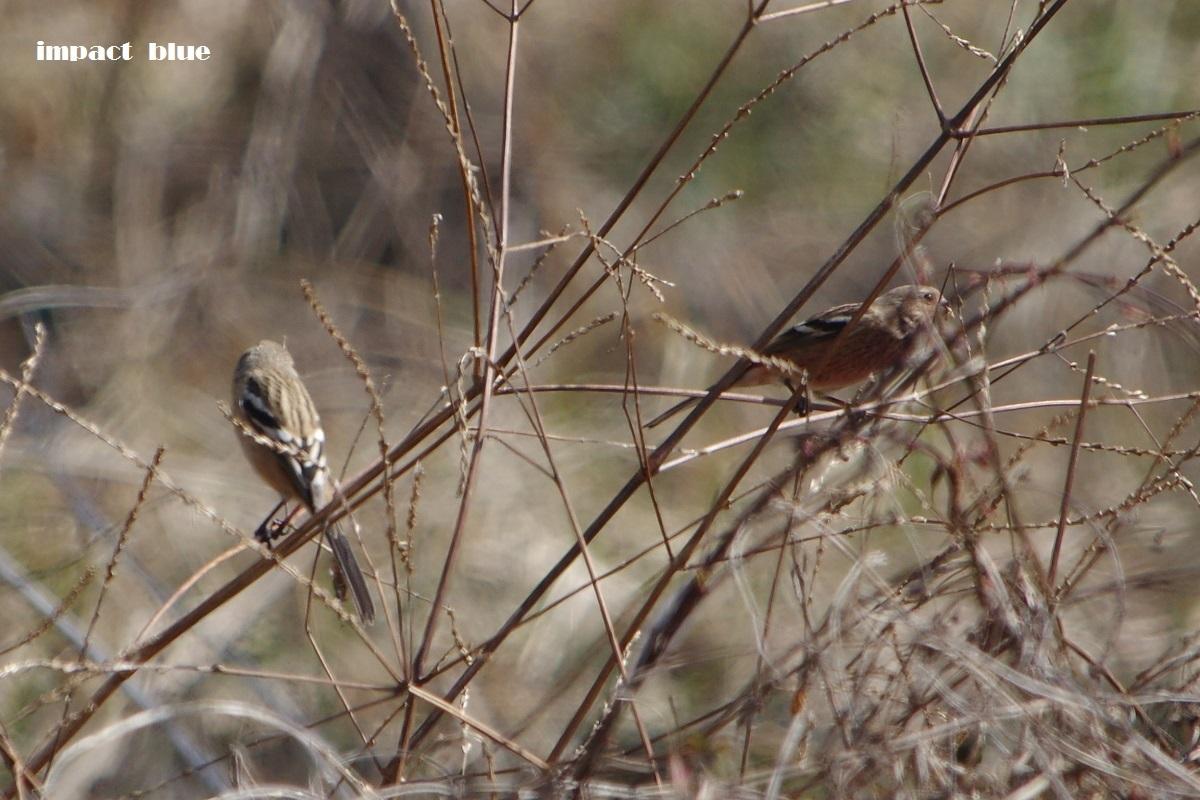 大きな森の野鳥たち♪_a0355908_20365721.jpg