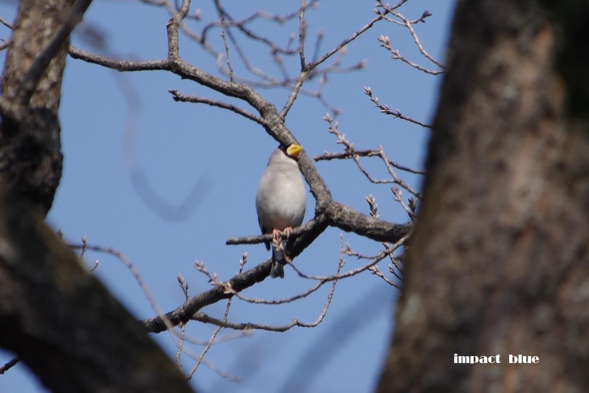 大きな森の野鳥たち♪_a0355908_20372113.jpg