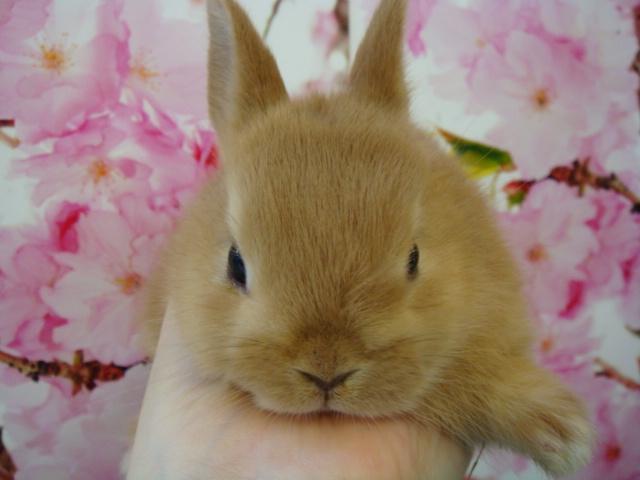 160304 ウサギ・モモンガ・ハリネズミ・ハムスター_f0189122_16354452.jpg