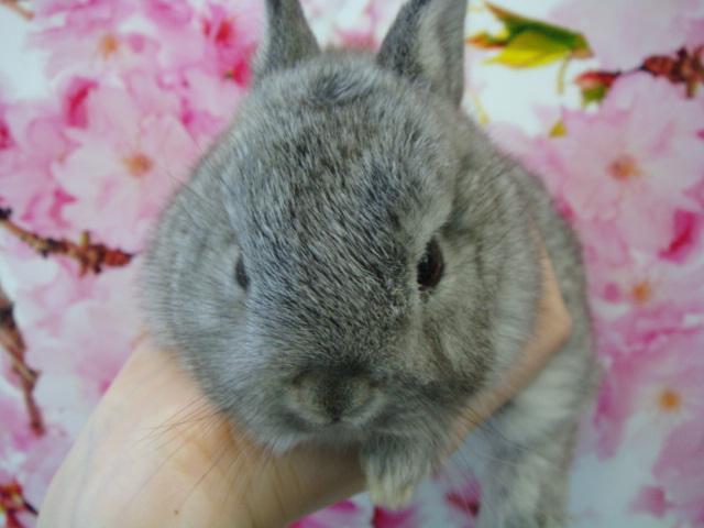 160304 ウサギ・モモンガ・ハリネズミ・ハムスター_f0189122_16372510.jpg