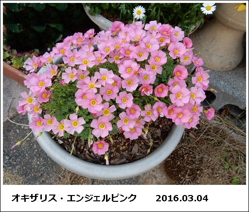 e0033229_1984687.jpg