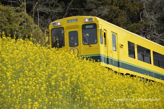 週末は菜の花電車にイチゴ狩り!「春を感じるお出かけスポット」ならここがおすすめ!_d0350330_17273863.jpg
