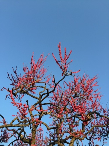 春の出会い #表参道 #青山通り #紅梅 #空 #東京_a0103940_06554862.jpg