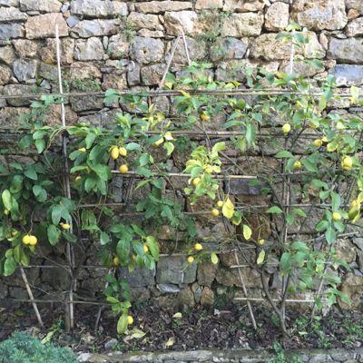 レモンの黄色と一人ひな祭り_d0136540_02065991.jpg