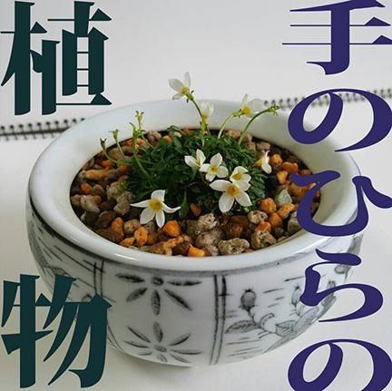 手のひらの植物_f0222045_10123711.jpg