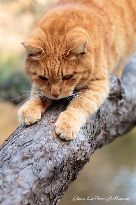 猫のいる風景 日比谷公園 爪とぎしてからのチャッピー_b0133053_0143396.jpg