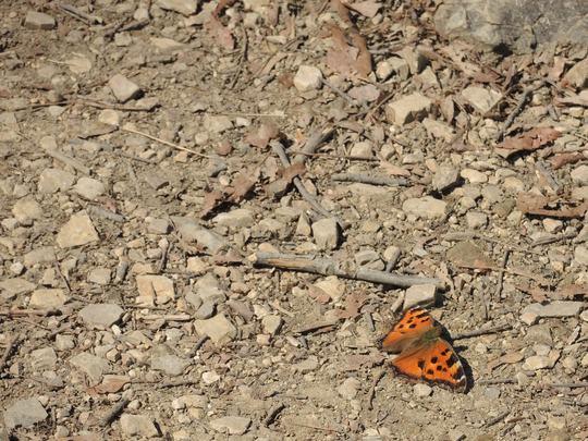 南高尾山稜に春を見つけました_e0232277_1113928.jpg