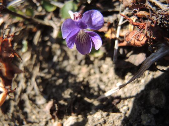 南高尾山稜に春を見つけました_e0232277_118568.jpg