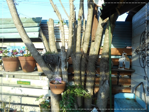 シェッドの屋根替え~^_^;_b0096584_17502814.jpg
