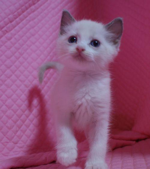 子猫ちゃん _e0033609_17433869.jpg