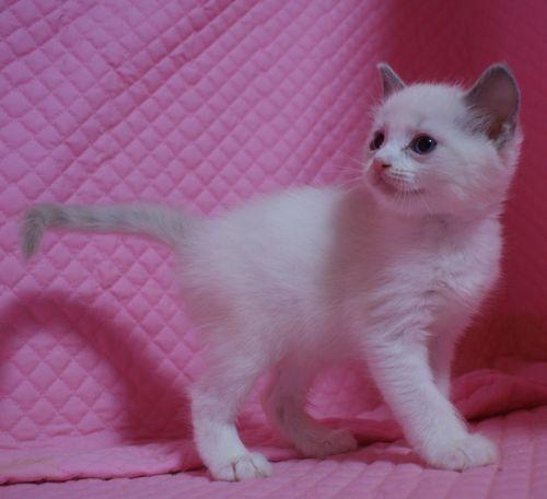 子猫ちゃん _e0033609_17435238.jpg