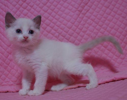 子猫ちゃん _e0033609_1744491.jpg