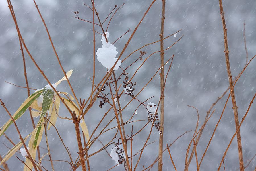 雪景色 総集編①_c0067040_09403217.jpg