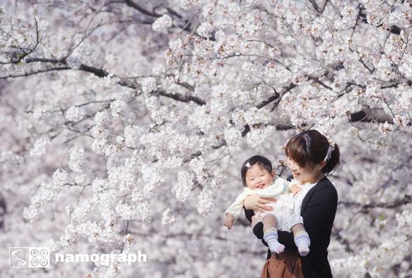 桜の季節 撮影受付中_a0165860_14484994.jpg