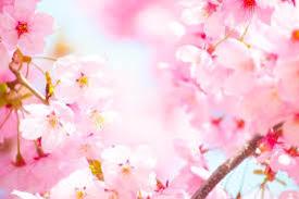 山鹿温泉さくら湯にて✿✿春色気分✿✿_f0015517_14370187.jpg