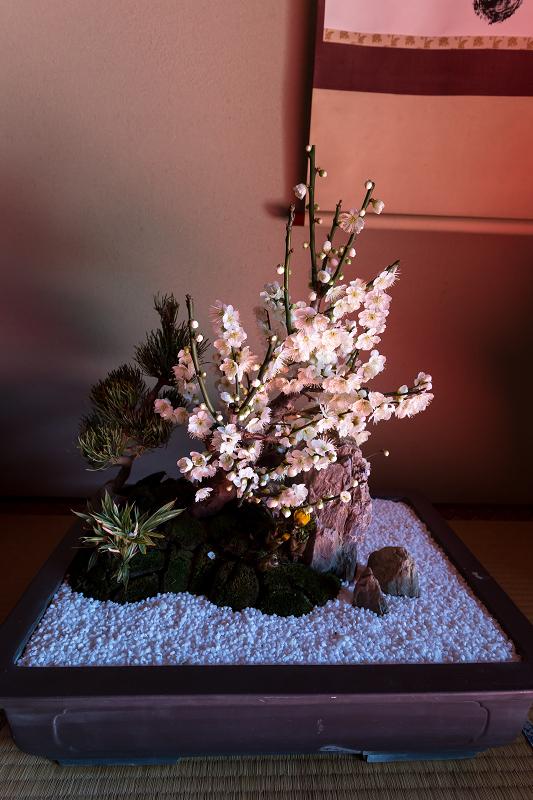 苔に咲く(等持院・有楽椿)_f0155048_2241840.jpg