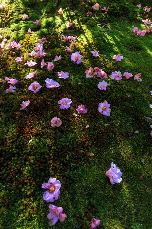 苔に咲く(等持院・有楽椿)_f0155048_22475296.jpg