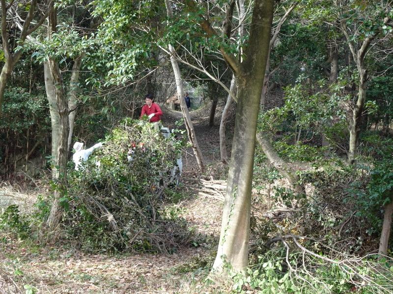 ヤブツバキの景観確保のための盗伐が続いている・・・うみべの森_c0108460_23412246.jpg