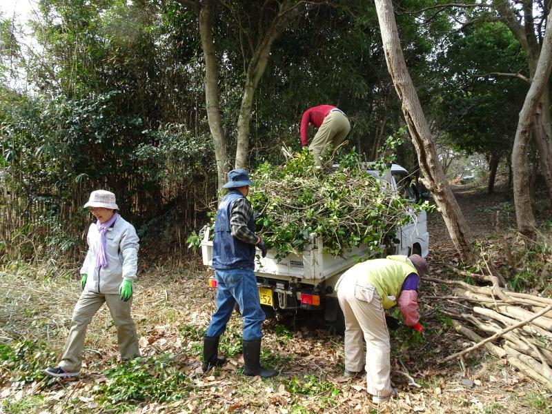 ヤブツバキの景観確保のための盗伐が続いている・・・うみべの森_c0108460_23412506.jpg