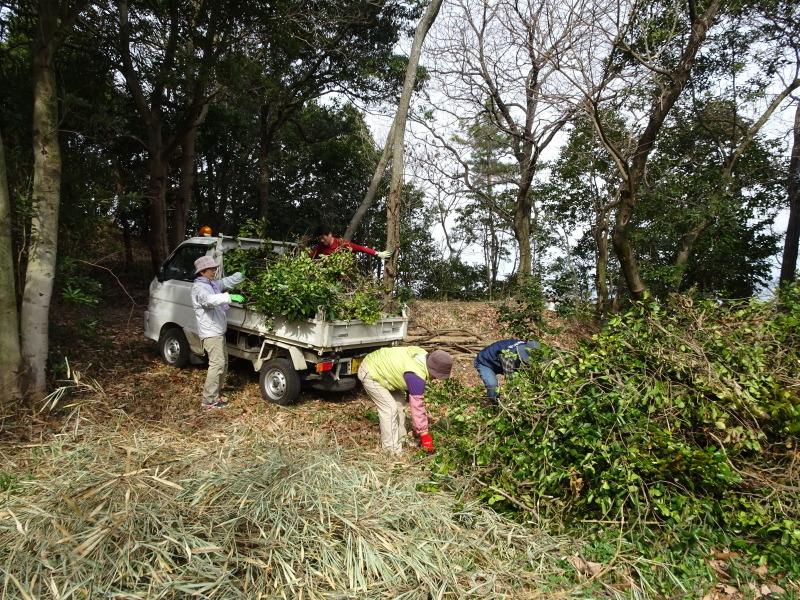 ヤブツバキの景観確保のための盗伐が続いている・・・うみべの森_c0108460_23413302.jpg