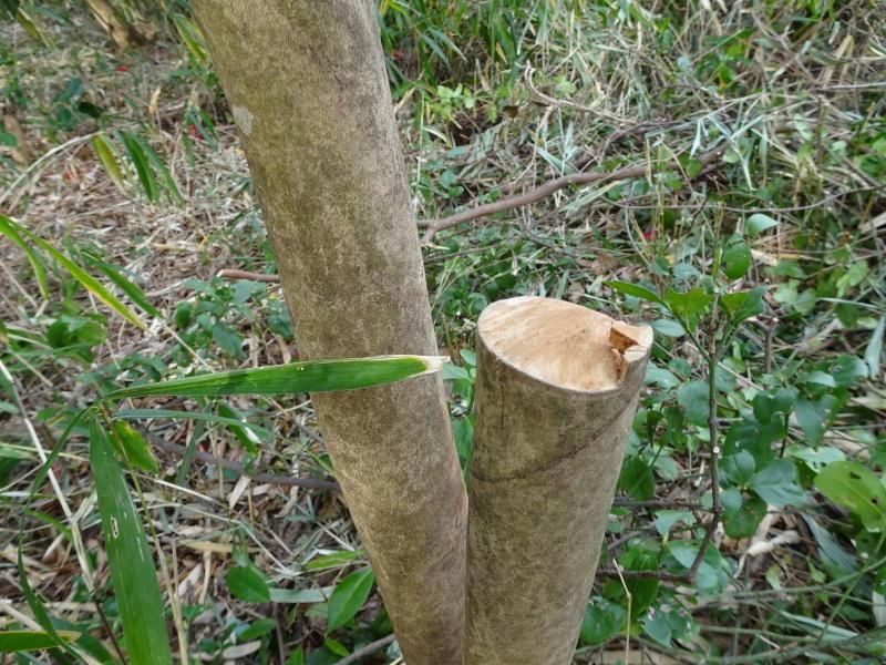 ヤブツバキの景観確保のための盗伐が続いている・・・うみべの森_c0108460_23413574.jpg