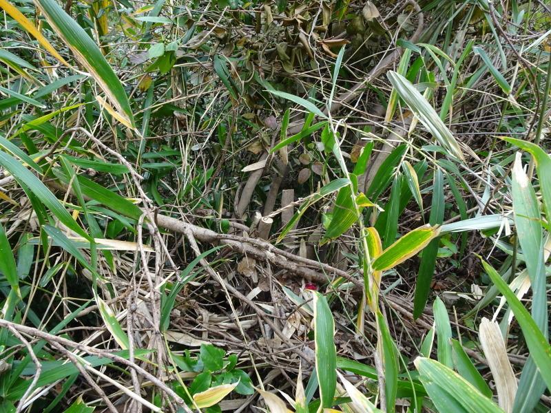 ヤブツバキの景観確保のための盗伐が続いている・・・うみべの森_c0108460_23413813.jpg