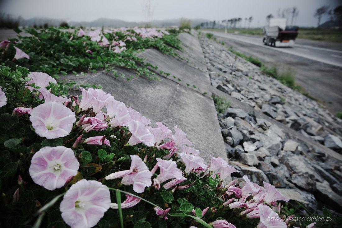 東松島市 野蒜海岸_b0191074_13235967.jpg