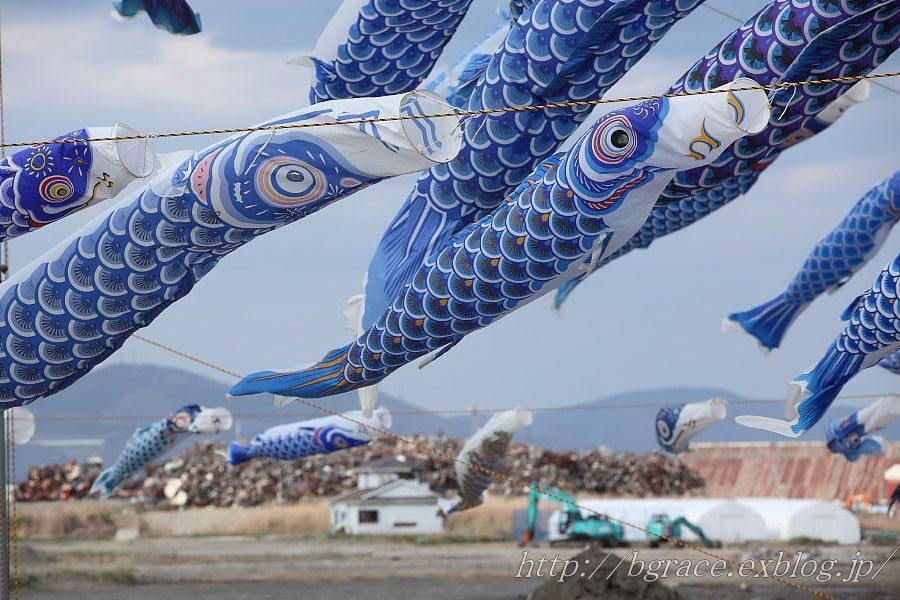 青い鯉のぼりプロジェクト 2_b0191074_1345082.jpg