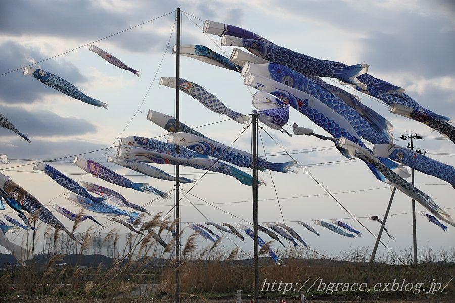 青い鯉のぼりプロジェクト 2_b0191074_13453265.jpg