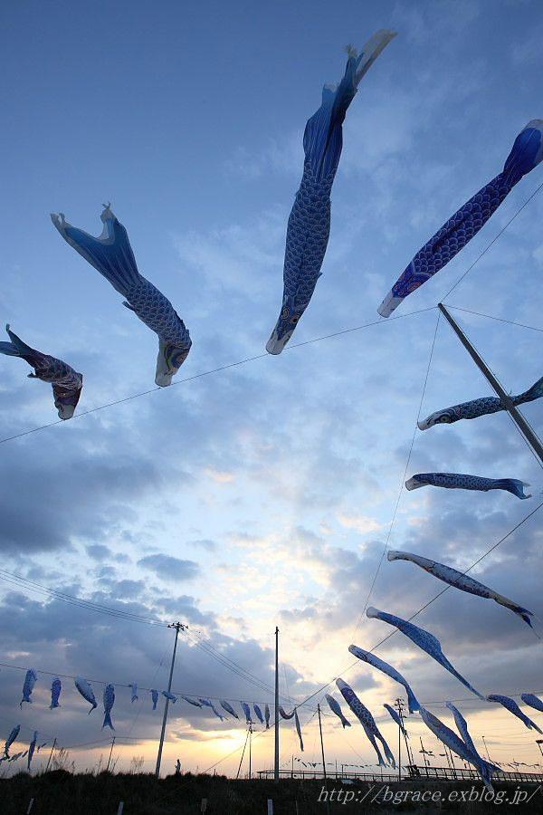 青い鯉のぼりプロジェクト 2_b0191074_13474018.jpg